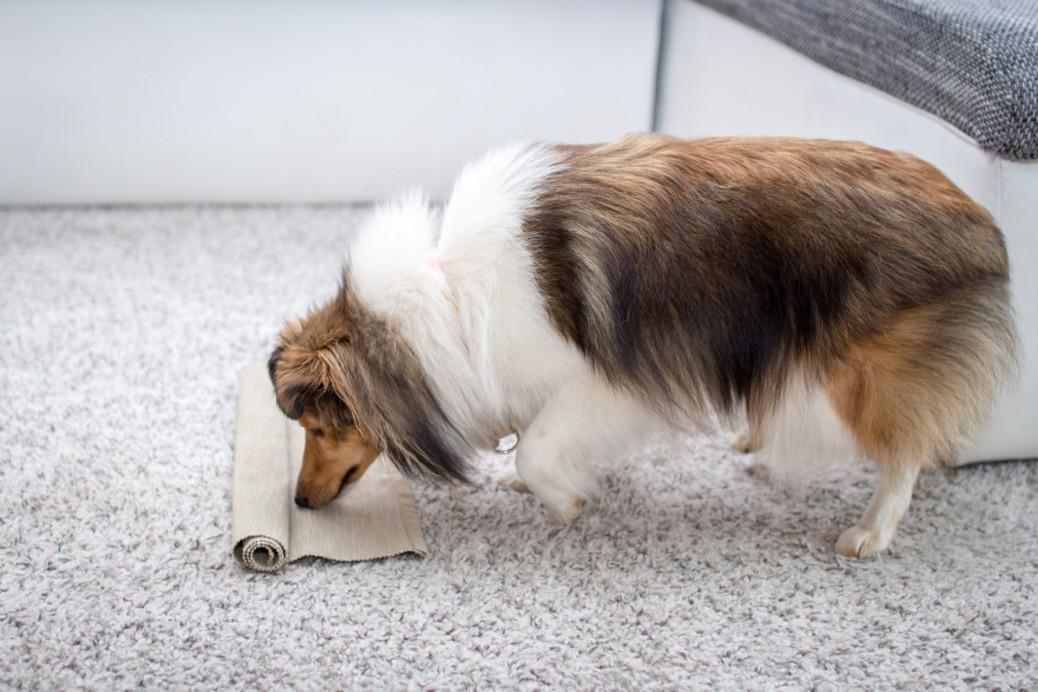 Beschäftigung Hunde indoor