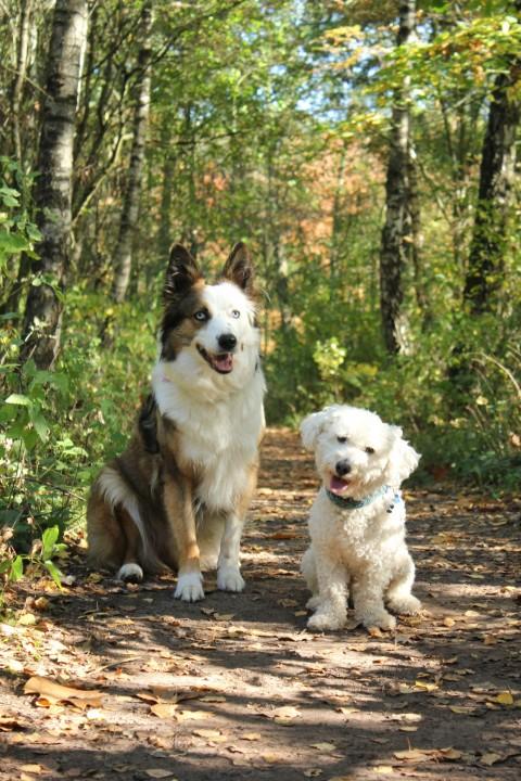 Herbst ist, wenn die Hundehaufen wieder im Laub verstecken spielen