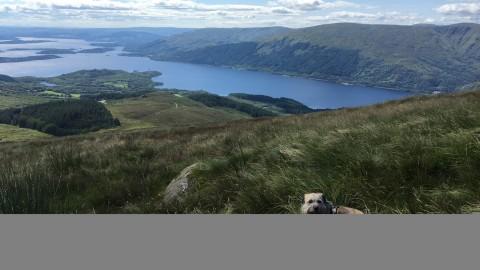 Reisen mit Hund nach England & Schottland