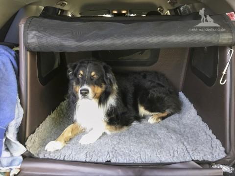 """Im Test: Tami, die erste """"Airbag-Hundebox"""" der Welt [Werbung]"""