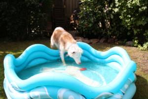 Hundepool - Wasserspaß zu Hause, Produkttest Hundepool Alcott Mariner