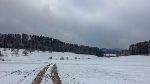 5 Gründe warum Schnee toll ist für Winter-hassende Hundehalter