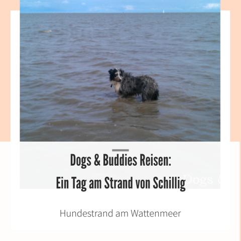 Dogs & Buddies Reisen: Ein Tag am Strand von Schillig