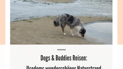 Dogs & Buddies Reisen: Usedoms wunderschöner Naturstrand bei Peenemünde