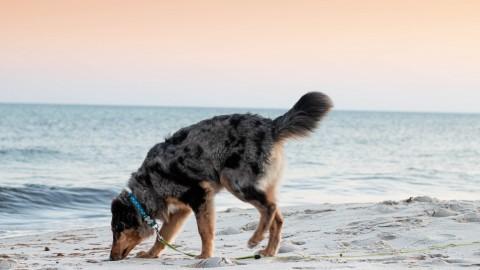 Campen mit Hunden – Gefällt es auch den Fellnasen?