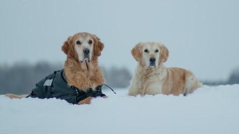 Im Winter [Hundsgschicht'n]