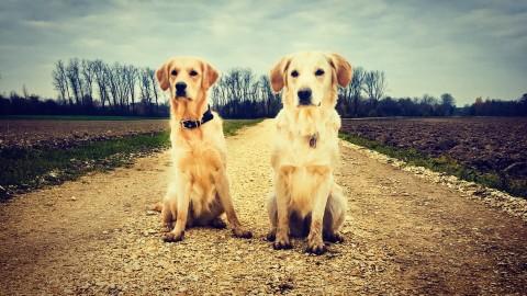 Zwei Wochen mit Gasthund Amy – was wir daraus gelernt haben