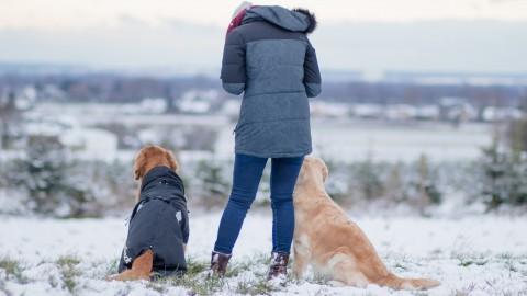 Ziele setzten – mit & für den Hund