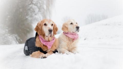 Das Leben ohne Hund ist sinnlos