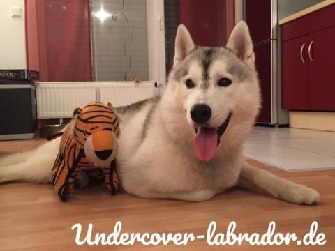 5 Indoor Aktivitäten für den Hund