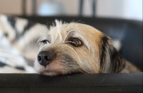 6 Tipps gegen den Silvesterstress beim Hund