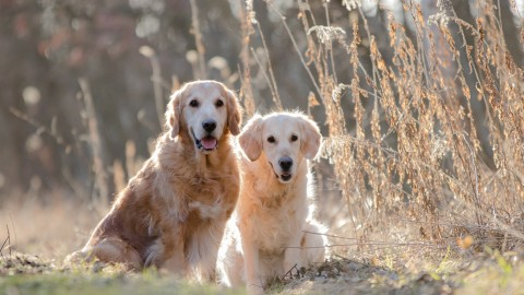 Frühlingsgefühle [Hundsgschicht'n]
