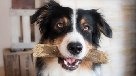 Hundetrick – Halten