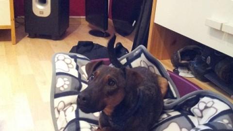 Im neuen zu Hause – Wilma zieht ein