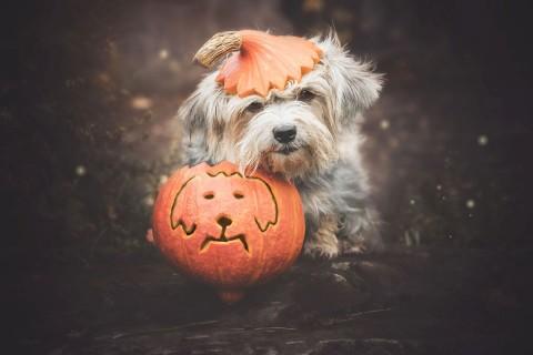 "Monatspfoto Oktober ""Jetzt wird es spooky!"""