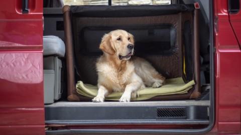 Erfahrungsbericht TAMI Dogbox