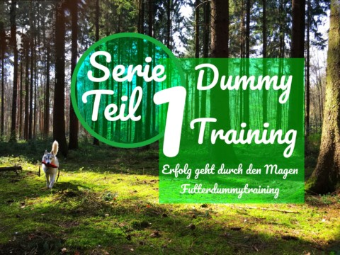Serie Dummy Training Teil 1