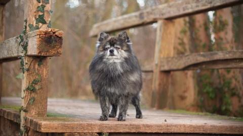 Physiotherapie für den Hund – Sinn oder Unsinn?