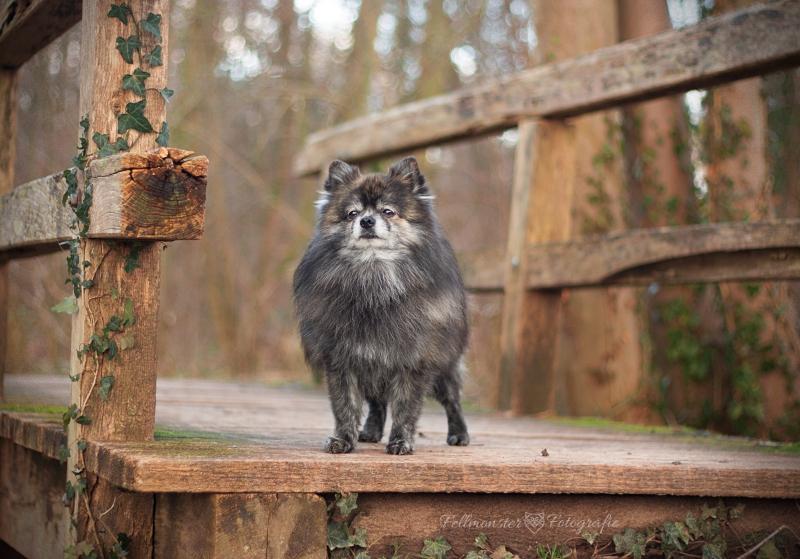 Chewie auf Brücke