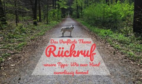 Das verflixte Thema Rückruf -unsere Tipps- wie euer Hund zuverlässig kommt