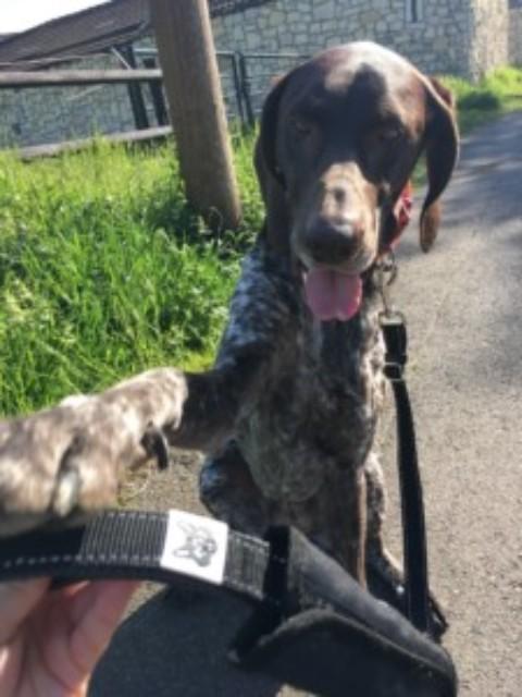 FOXY & FURRY – eine Hundeleine die viel verspricht