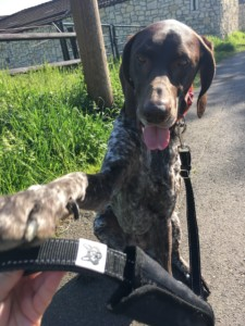 FOXY & FURRY - eine Hundeleine die viel verspricht