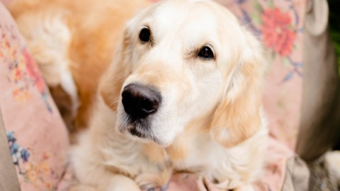 Flum Hundekissen [Werbung/Produkttest]