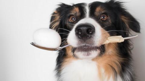 DIY – Eierschalen als natürliches Calcium