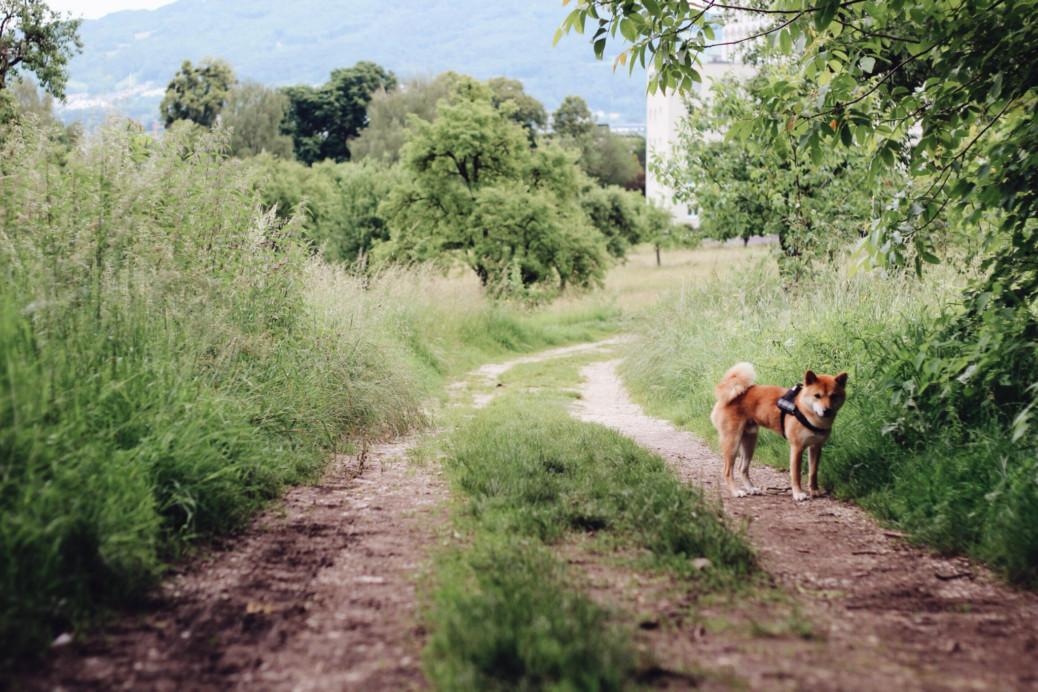 Pöstlingberg Wandern mit Hund