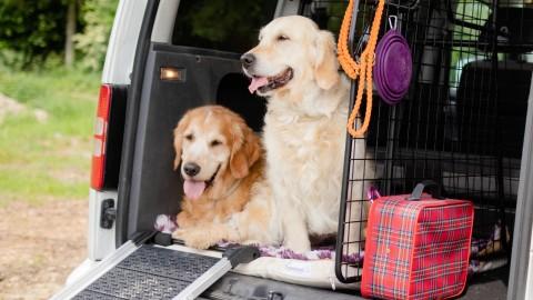 Ab in den Urlaub [Hundsgschicht'n]