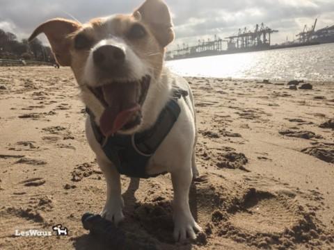 Wie beeinflusse ich meinem Hund mit meiner Stimmung und wie kann ich meinem ängstlichen Hund damit unterstützen?