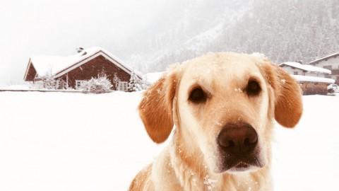 Urlaub & Abenteuer mit Hund: Leutasch in Österreich