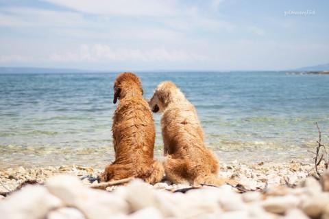 Kroatien mit Hund [Istrien 2019]