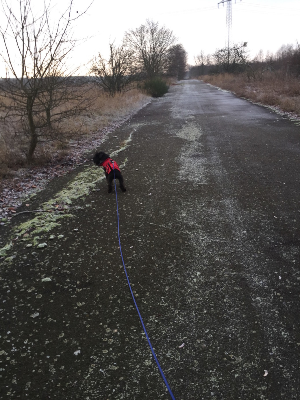 Pobertät beim Hund