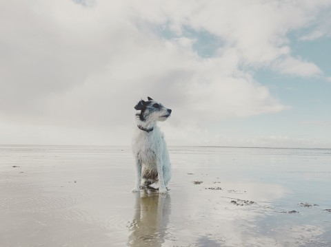 Rømø | Kleine Insel großes Glück | Urlaub mit Hund