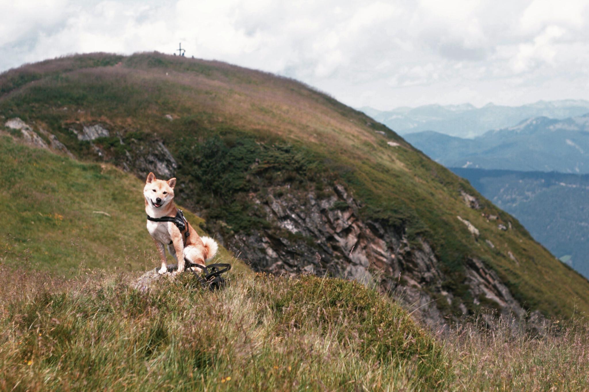 Reiteralm Schladming mit Hund