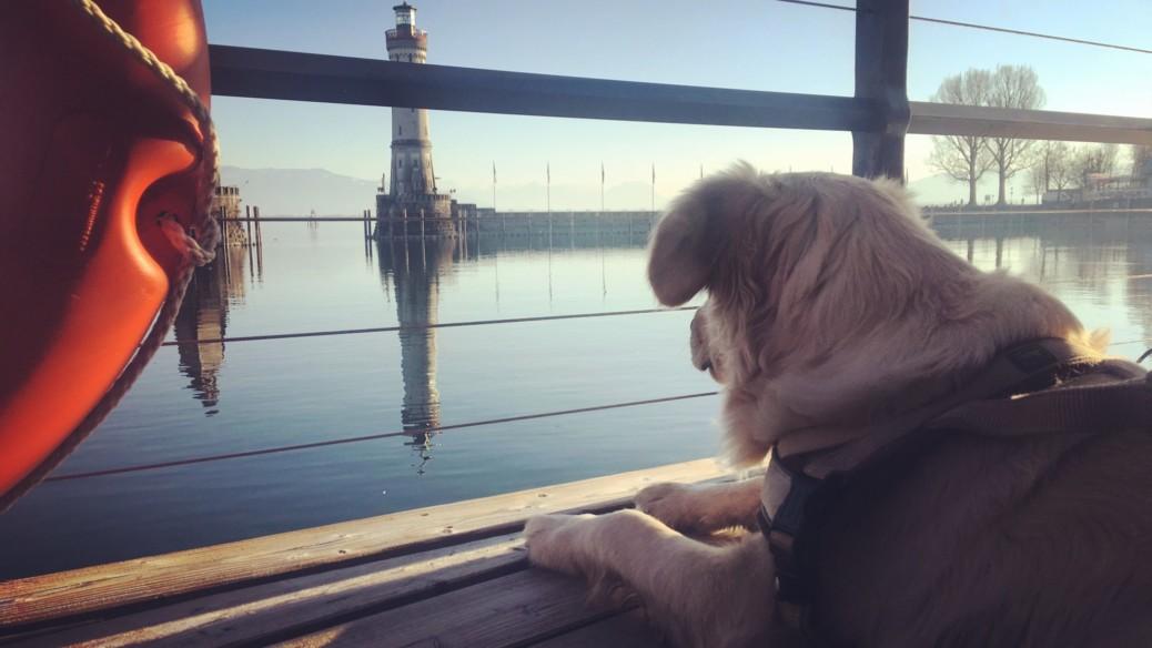 Bodensee mit Hund