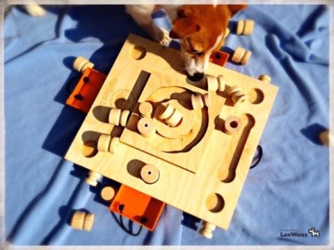 Welche Intelligenzspielzeuge sind empfehlenswert und wie kann man ganz einfach eins selber bauen?