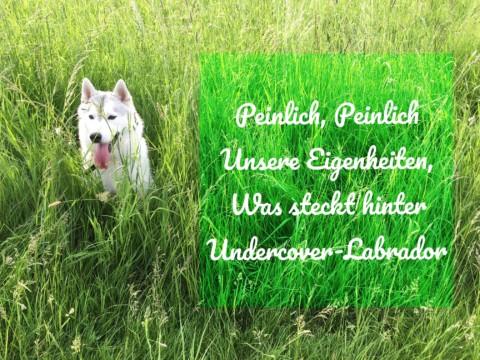 Peinlich, Peinlich, unsere Eigenheiten, was steckt hinter Undercover-Labrador