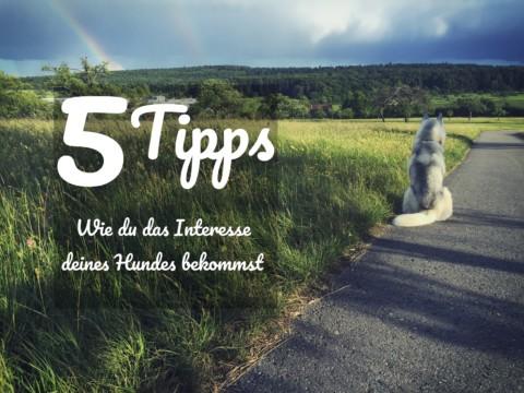 5 Tipps wie du das Interesse deines Hundes bekommst