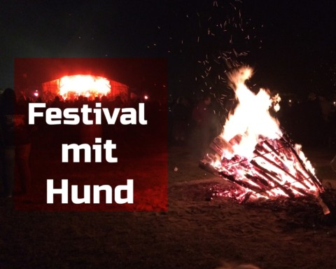 Festival – let´s get the party started – mit Hund