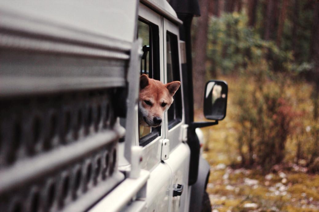 Camping Urlaub Polen mit Hund