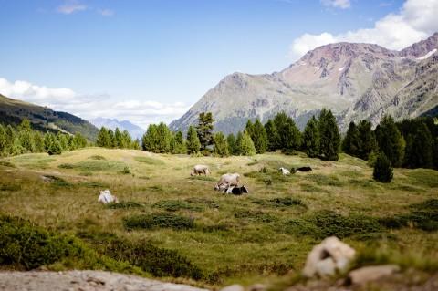 Urlaubsgeschichten [Südtirol 19]