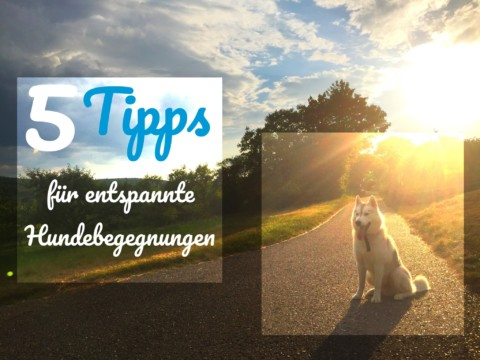 5 Tipps für entspannte Hundebegenungen
