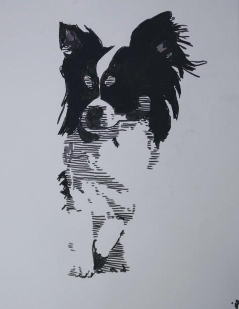 Chihuahua illustration