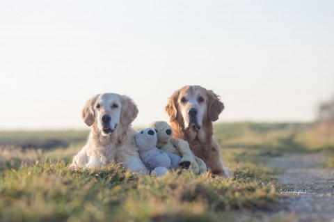 Die Geschichte einer kleinen Familie