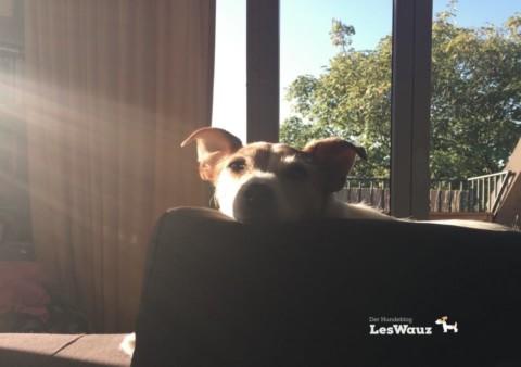 Wie kann ich das Immunsystem meines Hundes ganz natürlich stärken?
