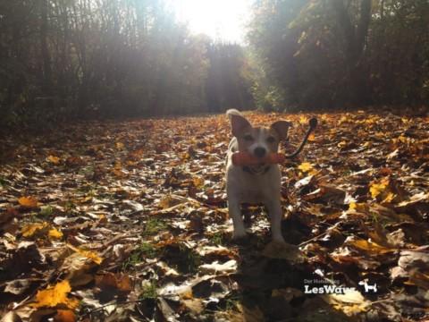 Unsere Multitasking-Welt: Nur einfach spazieren mit dem Hund. Sooo langweilig… oder?!