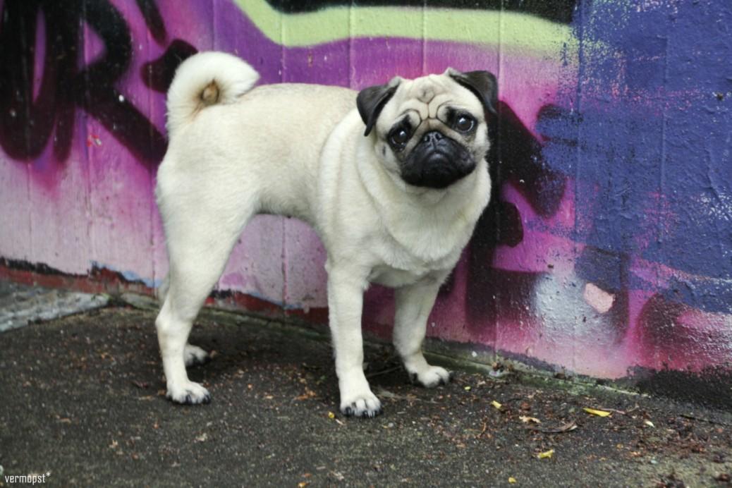 Hund Graffiti Fotografie