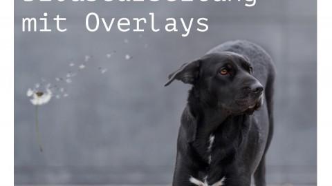 Vorher/Nachher: Das Arbeiten mit Overlays